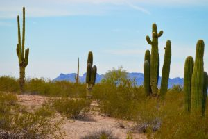 Queen Creek Private Jet and Air Charter Flights